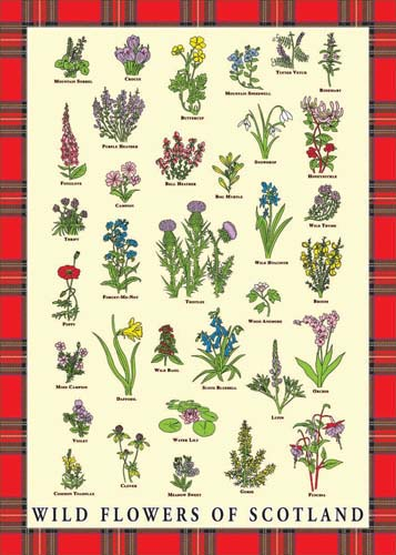 Wild Flowers Of Scotland Tea Towel : wild flowers of scotland tea towel 2528 p from www.in4adig.co.uk size 357 x 500 jpeg 43kB